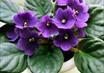 Значение комнатных растений по фен-шуй!